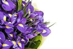 Blumenstrauß der Blenden Stockbild