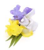 Blumenstrauß der Blenden Lizenzfreie Stockfotos