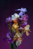 Blumenstrauß der Blendenblumen Lizenzfreie Stockbilder
