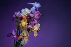 Blumenstrauß der Blendenblumen Stockfoto