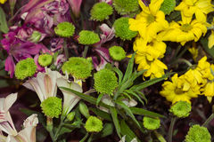 Blumenstrauß der bunten Blumen Stockfotos