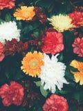 Blumenstrauß der bunten Blumen Lizenzfreies Stockfoto
