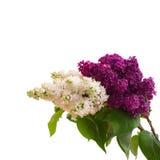 Blumenstrauß der bunten Frühlingsblume Stockfotografie