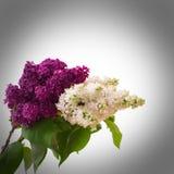 Blumenstrauß der bunten Frühlingsblume Stockbild