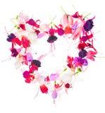 Blumenstrauß der bunten Fuchsie des Valentinsgrußherz-Designs blüht IS-IS Lizenzfreies Stockbild