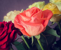 Blumenstrauß der bunten Rosen Stockfotografie
