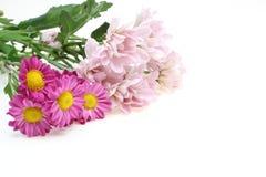 Blumenstrauß der Chrysantheme Stockfoto