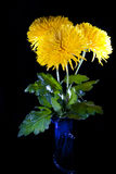 Blumenstrauß der Chrysanthemen Stockbilder
