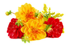 Blumenstrauß der Dahlie blüht i Lizenzfreies Stockbild