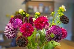 Blumenstrauß der Dahlien Lizenzfreies Stockbild