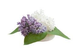 Blumenstrauß der Flieder, lokalisiert auf weißem Hintergrund Lizenzfreies Stockbild