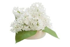 Blumenstrauß der Flieder, lokalisiert auf weißem Hintergrund Stockbild