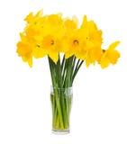 Blumenstrauß der frischen Frühlingsgelbnarzisse lokalisiert über Weiß Stockfoto