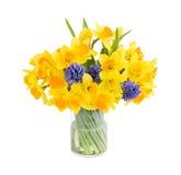 Blumenstrauß der frischen Narzisse und der Hyazinthen lokalisiert über Weiß Lizenzfreie Stockfotos