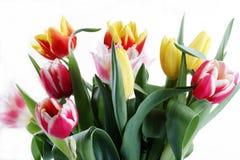 Blumenstrauß der frischen Tulpen stockbilder