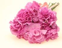 Blumenstrauß der Gartennelke Lizenzfreie Stockfotografie