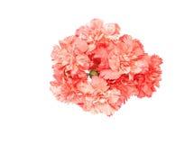 Blumenstrauß der Gartennelke lizenzfreies stockfoto