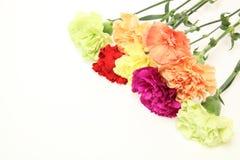 Blumenstrauß der Gartennelke stockbilder