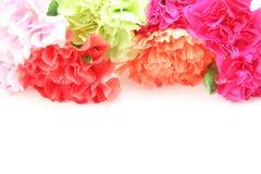 Blumenstrauß der Gartennelke in einem weißen Hintergrund lizenzfreie stockfotos