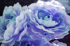 Blumenstrauß der Gartennelken Stockbilder