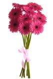 Blumenstrauß der Gerberablumen Stockfotos