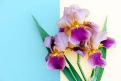 Blumenstrauß der hellen Iris auf einem gelben und blauen Hintergrund, Dekorum Lizenzfreie Stockfotografie
