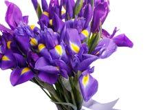 Blumenstrauß der Iris gebunden mit lila Band Stockbilder