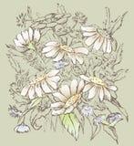 Blumenstrauß der Kamille Lizenzfreie Stockbilder