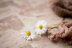Blumenstrauß der Kamille auf einem schwarzen konkreten Hintergrund Frische Blumen Schöner Blumenstrauß von Wildflowers Kopieren S lizenzfreies stockfoto