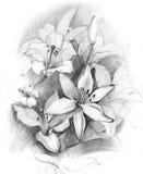 Blumenstrauß der Lilie Stockbild