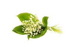 Blumenstrauß der Lilie des Tales Lizenzfreie Stockfotos