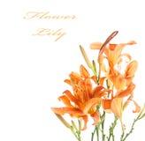 Blumenstrauß der Lilien Stockbilder