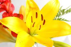 Blumenstrauß der Lilien Lizenzfreies Stockfoto