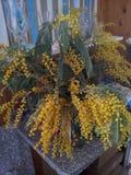 Blumenstrauß der Mimose Lizenzfreie Stockfotos