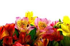 Blumenstrauß der Minitageslilien Stockfotografie