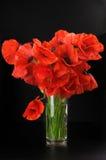 Blumenstrauß der Mohnblumen Stockbilder