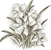 Blumenstrauß der Narzisse Stockbilder