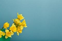 Blumenstrauß der Narzisse auf blauem backgroung Lizenzfreie Stockfotografie