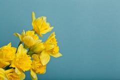 Blumenstrauß der Narzisse auf blauem backgroung Stockbilder