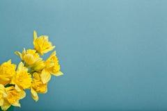 Blumenstrauß der Narzisse auf blauem backgroung Lizenzfreie Stockfotos