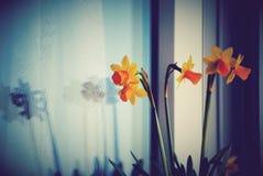 Blumenstrauß der Narzissen stockfotografie