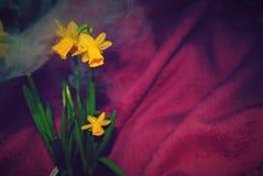 Blumenstrauß der Narzissen stockfotos