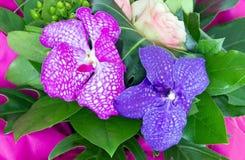 Blumenstrauß der Orchideen Lizenzfreie Stockbilder