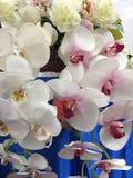 Blumenstrauß der Orchideen Stockbild