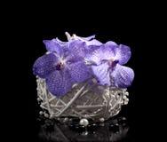 Blumenstrauß der Orchideen in einem Vase lizenzfreies stockbild