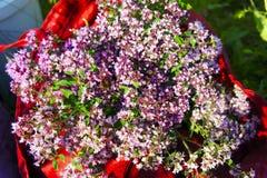 Blumenstrauß der Oreganonahaufnahme stockbilder