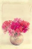 Blumenstrauß der Pelargonie Stockfotos