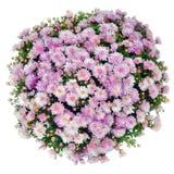 Blumenstrauß der rosafarbenen Blumen stockfoto
