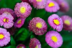 Blumenstrauß der rosafarbenen Blumen Stockbilder
