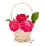 Blumenstrauß der rosafarbenen Rosen Lizenzfreies Stockfoto